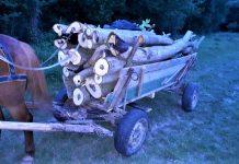 Dolj: Prinși la furat de lemne în pădurea Bârza din Valea Stanciului