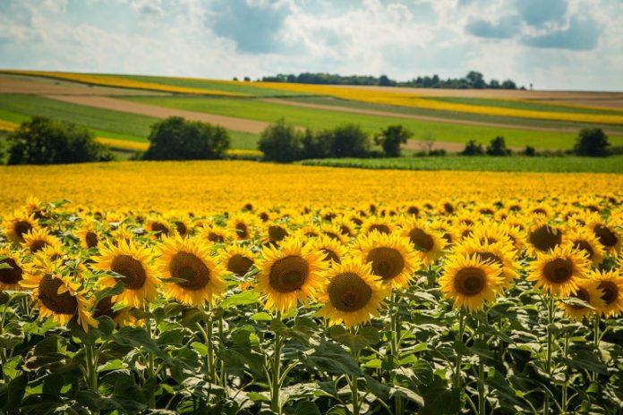 Index de Secetă, o alternativă viabilă de despăgubire a fermierilor în caz de secetă, pornind de la deficitul de 30%
