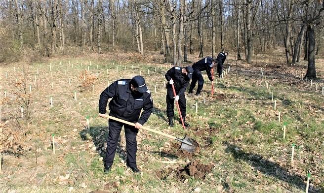 Jandarmeria Olt 171 de stejari pentru Romania