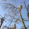 copaci tulcea