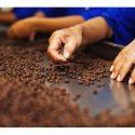 fabrica de cafeaGermania